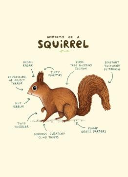 Anatomy Of A Squirrel