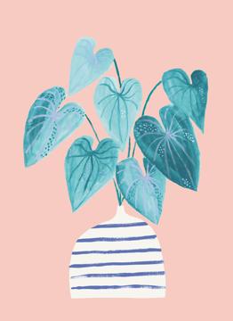 Minimal House Plant