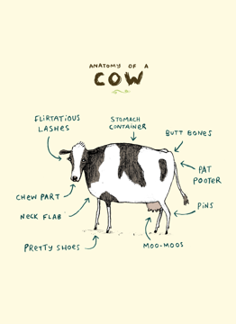 Anatomy Of A Cow