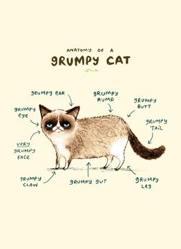 Anatomy Of A Grumpy Cat