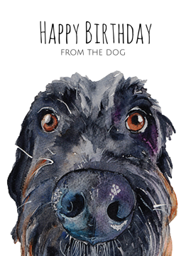 Labradoodle Happy Birthday From The Dog