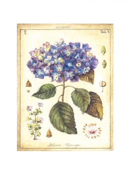 Hydregan Flower