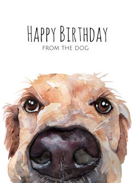 Retriever Happy Birthday From The Dog