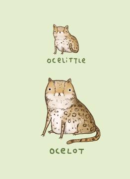 Ocelittle Ocelot