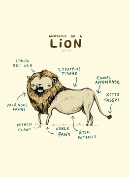 Anatomy Of A Lion