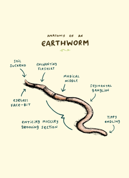 Anatomy Of An Earthworm