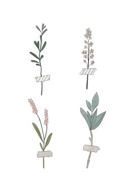 Botanic Stems