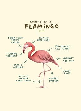 Anatomy Of A Flamingo