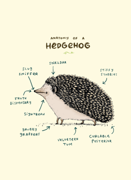 Anatomy Of A Hedgehog