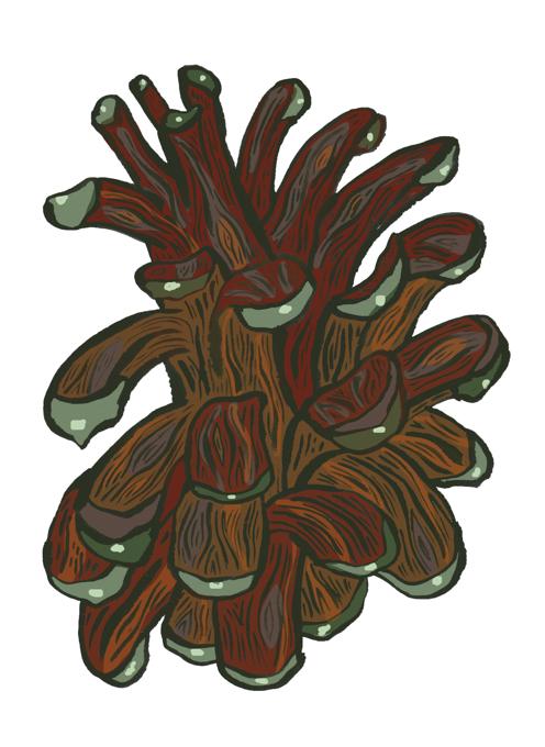 Pinecone of the tundra