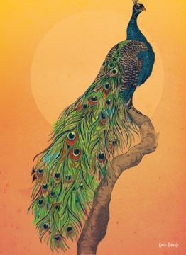 Coloured Peacock