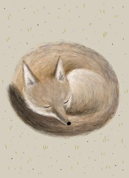 Swift Fox Sleeping
