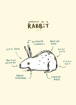 Anatomy Of A Rabbit