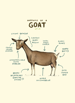 Anatomy Of A Goat